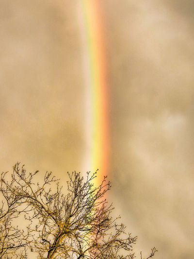 Rainbow colors nearly vertical with effects Rainbow HDR On Tree Without Leaves Brown Sky Sandy Sky Colors Sky Edited Natural Phenomenon Rainbow Part Tree High-section Sky Photography