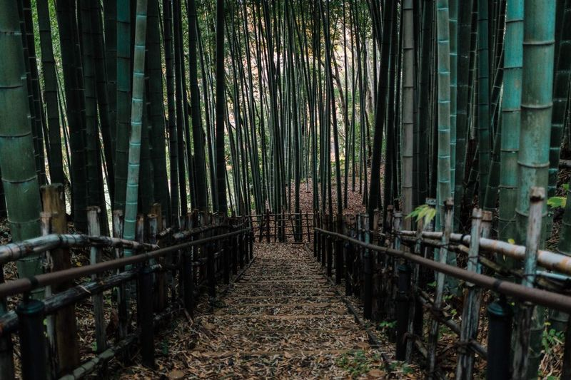 My Year My View Bamboo Grove The Way Forward Bamboo - Plant Forest Nature Outdoors No People Day Tokyo,Japan