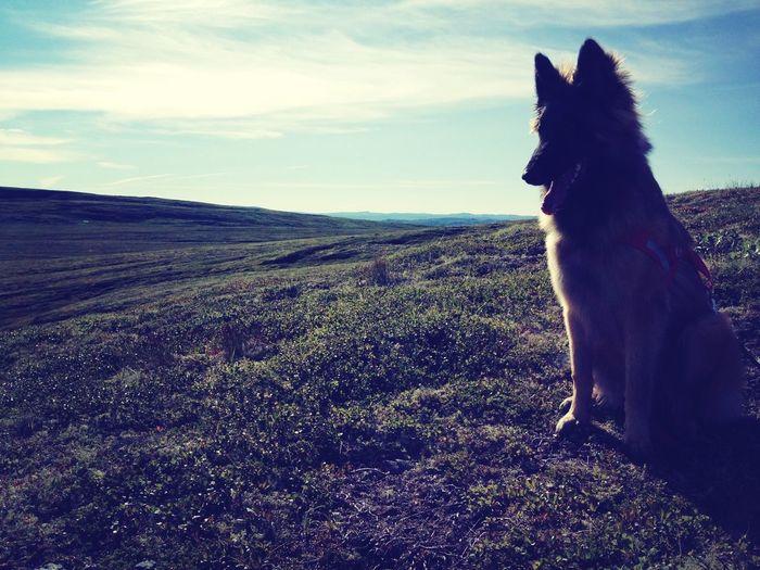 fineste lille hundevalpen på fjelltur