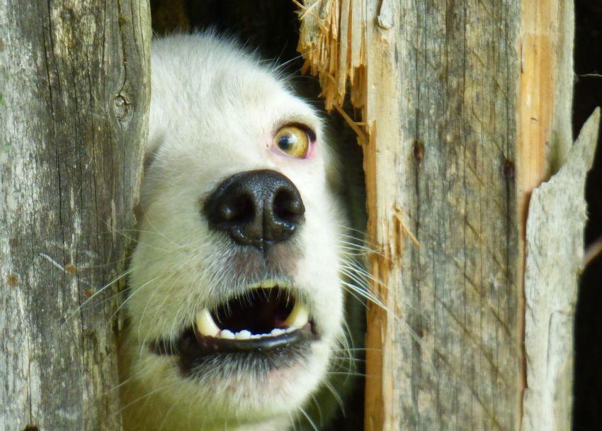 Close-up Dog Dog And Fence Dog Eye Dog Sight Eye Looking At Camera Portrait