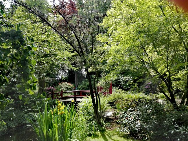 Japanischer Garten In Leverkusen Japanese Garden Growth Green Color Tree No People Outdoors Grass Day Nature Shadow Sunlight Beauty In Nature Green Color The Great Outdoors - 2017 EyeEm Awards Landscape Tranquility Freshness Beauty In Nature Grass Plant Nature Tree Growth