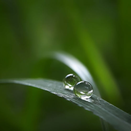dew drop on a