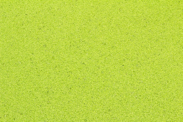 way Backgrounds Blank Bright Brightly Lit Close-up Copy Space Directly Above Full Frame Golf Grass Green - Golf Course Green Color Lawn Leisure Activity Nature No People Pattern Plant Sparse Sport Springtime Textured  Textured Effect Vibrant Color Yellow