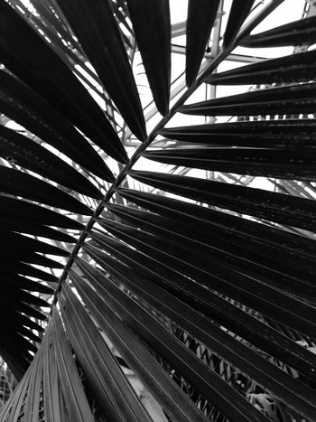 Low Angle View No People Backgrounds Day Full Frame Built Structure Architecture Frond Outdoors Abstract Tree Nature Close-up Fanned Out