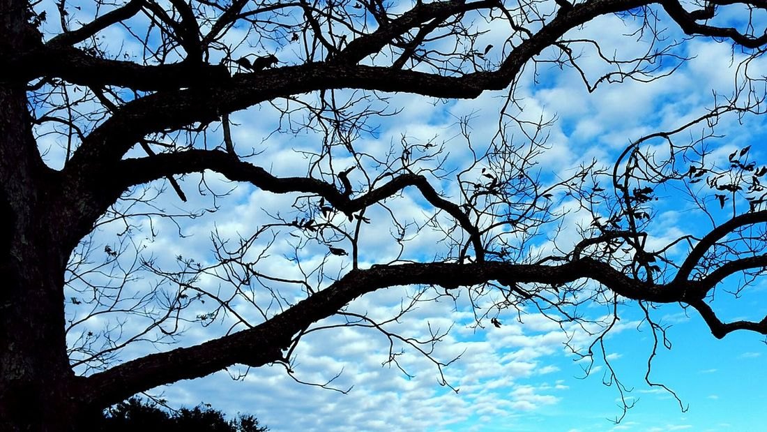 Just realized I had gotten a squirrel in my shot... Squirrel Louisiana Eye Of Ky Louisiana Skies Beautiful Nature Tree_collection  Layers Tree And Sky