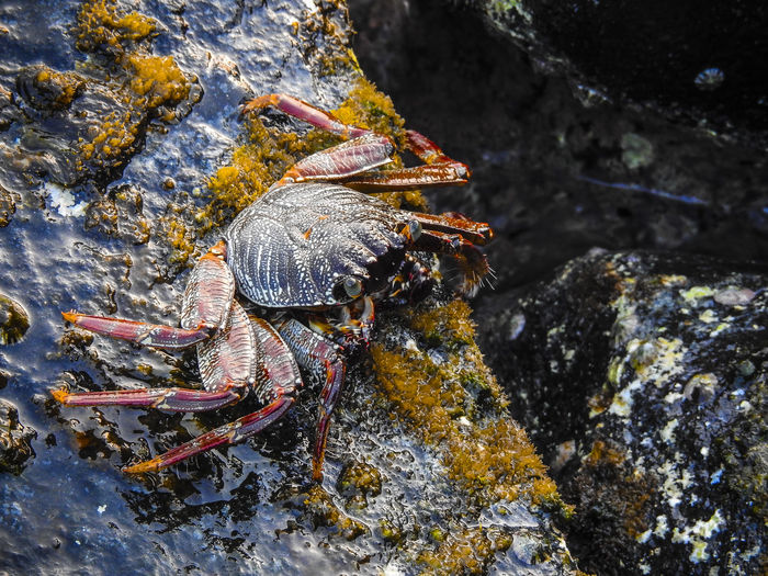 Close-up of crab on rock in sea