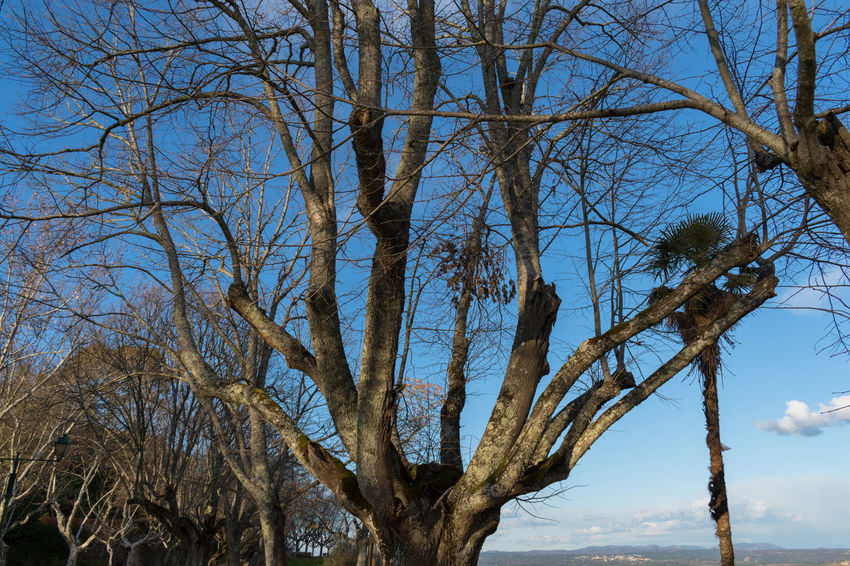 Castle of Abrantes Portugal Bare Tree Beauty In Nature Blue Branch Day Growth Low Angle View Nature No People Outdoors Scenics Sky Tranquility Tree Tree Trunk