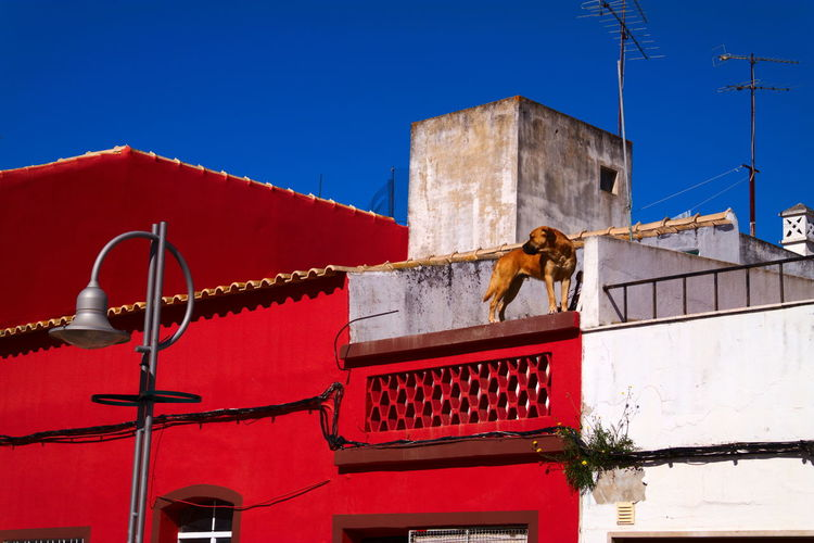 Low angle view of building against sky with a dog on a red rooftop in portugal