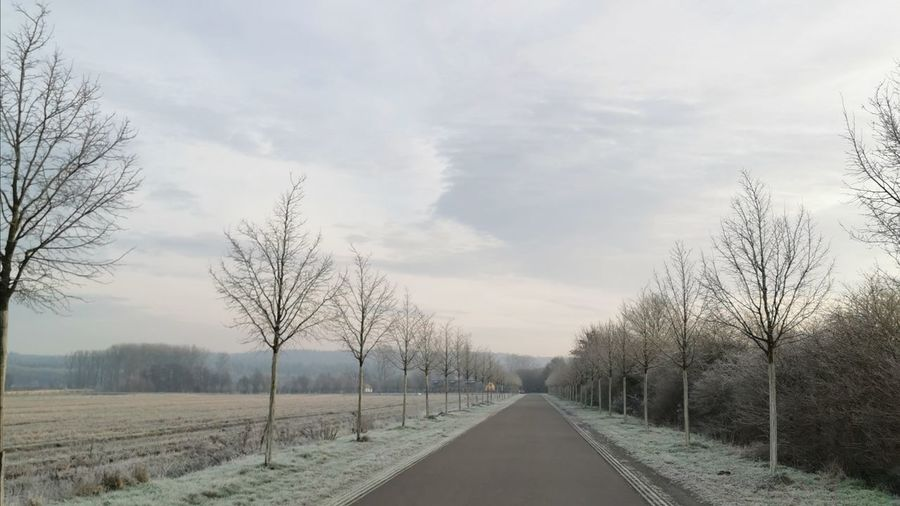 Empty road along bare trees against sky