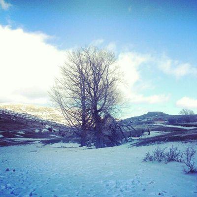 Árbol de invierno