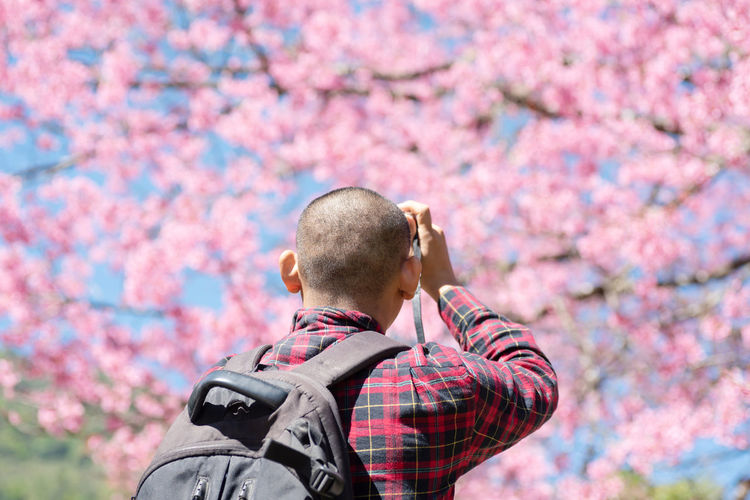 Rear view of man photographing while standing with cherry blossom tree