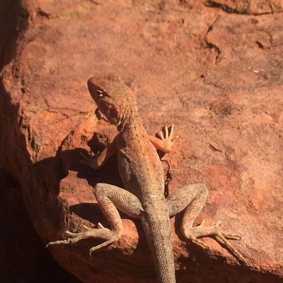 mimetismo perfetto 😏 EyeEm EyeEm Selects EyeEm Gallery EyeEm Best Shots EyeEm Nature Lover Pet Portraits Reptile Lizard Nature 🌏my Life⛩ 🤠my Holidays😎