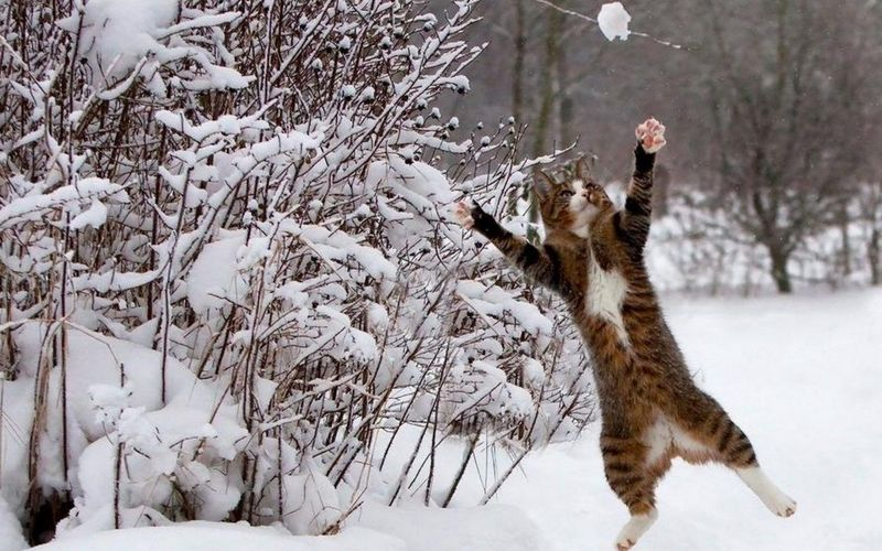 View Of Cat Playing In Snow Covered Landscape