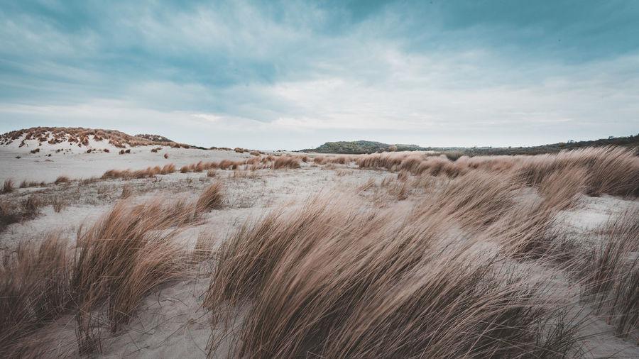Sand Dunes Sky Cloud - Sky Beauty In Nature Landscape Non-urban Scene Horizon Over Land Outdoors Environment Scenics - Nature Field Seaside Beach Sand Dune
