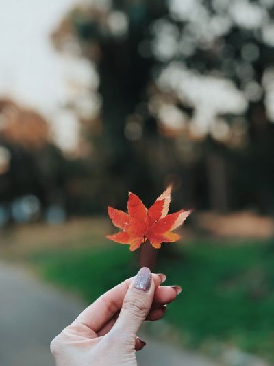 Human Hand Hand Human Body Part Holding One Person Focus On Foreground Autumn Finger Leaf Close-up Real People Personal Perspective Human Finger Unrecognizable Person Plant Part Lifestyles Body Part Day Maple Leaf Nature