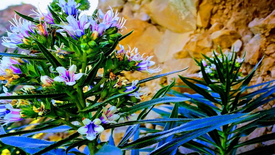 Nature Flower Beauty In Nature Plant Growth No People Day