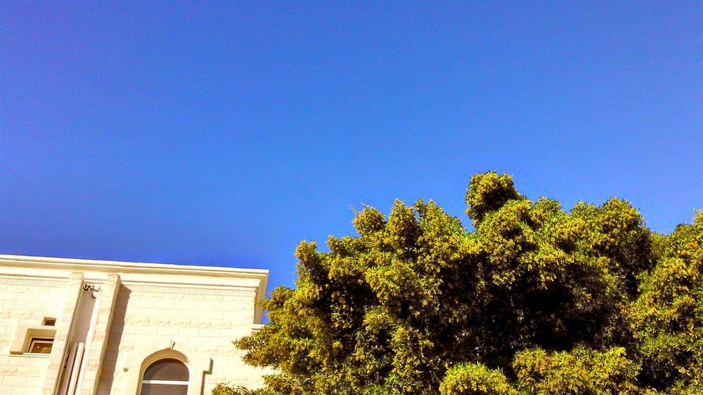 Negative Space Blue Sky Tree White House Taking Photo Mobilephotography