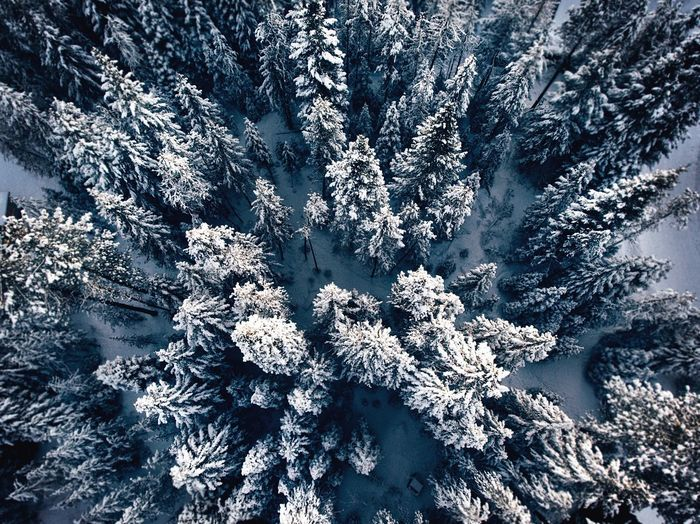 Snow Winter Cold Temperature Nature Pinaceae No People Pine Tree Beauty In Nature Tranquility Frozen Outdoors Mountain Forest Scenics Tree Shades Of Winter