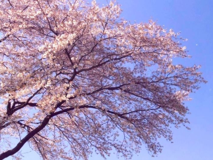 Falling Awake Flowers Trees Taking Photos Japan