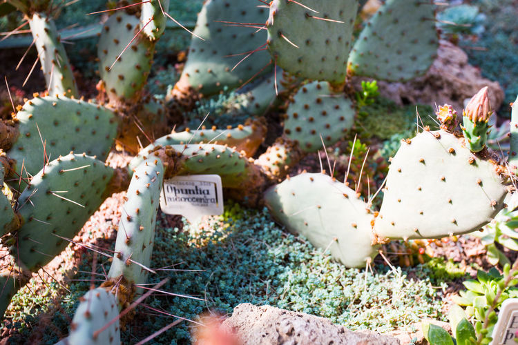High angle view of succulent plants on field