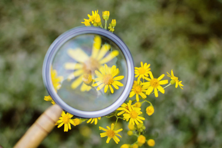 Close-Up Of Yellow Flower Through Magnifying Glass
