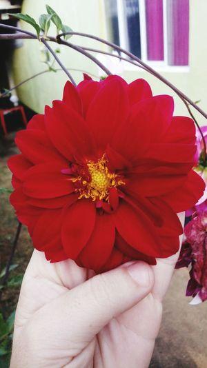 flor Human Hand