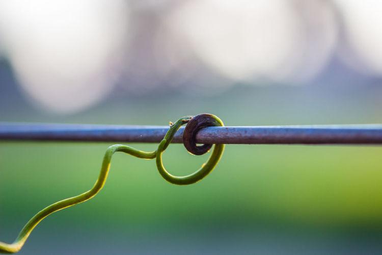 vine grabbing