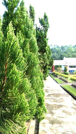 Tree First Eyeem Photo Trees Green FB:gumball3000@kimo.com Line:gumball3000