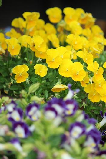 花 Nature_collection EymEm Nature Lovers Flowers,Plants & Garden EyeEm Nature Lover 花と庭