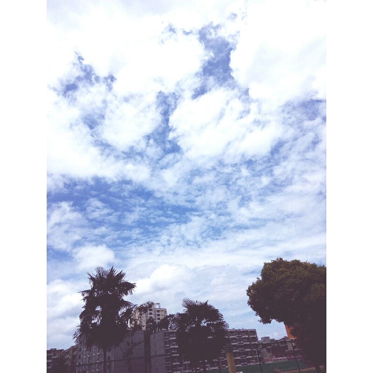 sky, tree, cloud - sky, low angle view, no people, outdoors, palm tree, day, building exterior, architecture, growth, beauty in nature, nature