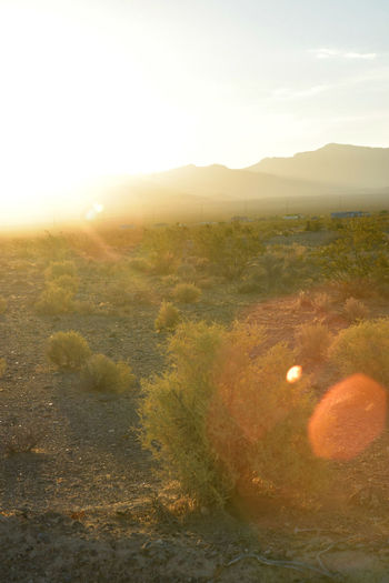 sun behind hills illuminates and flares over the Mojave Desert landscape Backlight Mojave Desert Backlighting Backlit Beauty In Nature Desert Heat Environment Hot Climate Landscape Lens Flare Nature Nevada No People Non-urban Scene Outdoors Plant Scenics - Nature Sky Sun Sunlight Sunset Tranquil Scene Tranquility