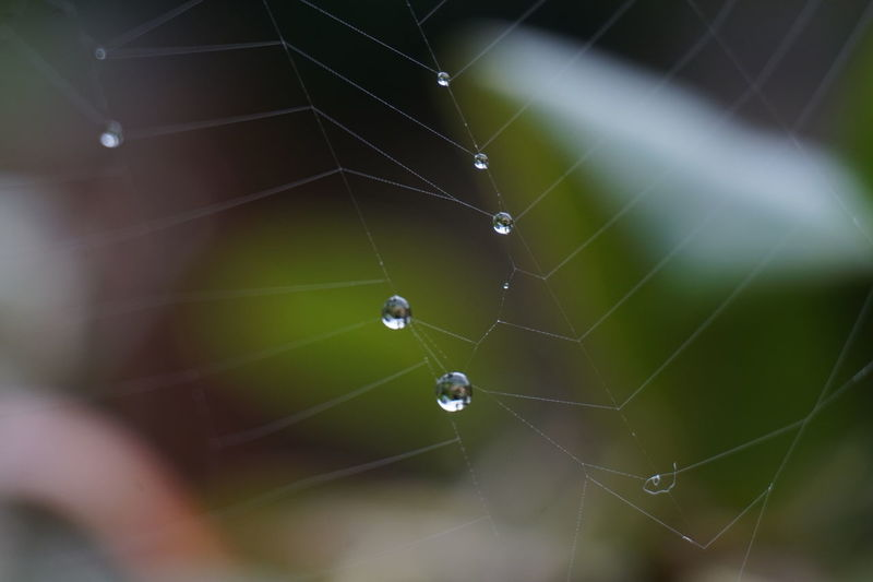 6345 Blurred Background Close-up Cob Web Complexity Day Drop Droplet Droplets Drops Of Water Focus On Foreground Fragility Natural Pattern Nature No People Outdoors Rain Spider Spider Web Spiderweb Spinning Water Web Art Is Everywhere