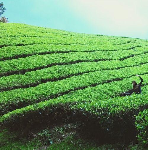 Hijau muda..sejuk mata Green Tea EyeEm Nature Lover Fresh And Clean