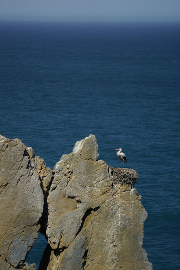 walking a pilgrim´s path Sea Water Rock Rock - Object Solid Animal Wildlife Bird Beauty In Nature Animals In The Wild Perching Scenics - Nature Nature Vertebrate Animal Themes Animal Rock Formation Day Horizon Over Water No People Outdoors