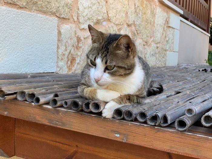 Katze Auf Dem