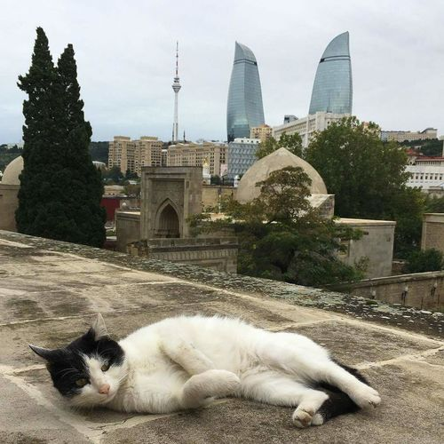 No People Day Sky Phone My Live, My Wold ????♥♥♥ PhonePhotography One Plus 3 Baku♡♥ Cat