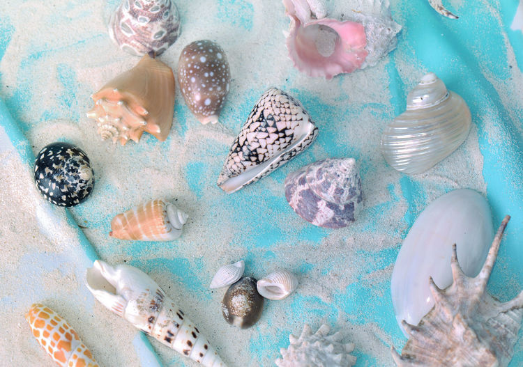 High angle view of seashells in sea