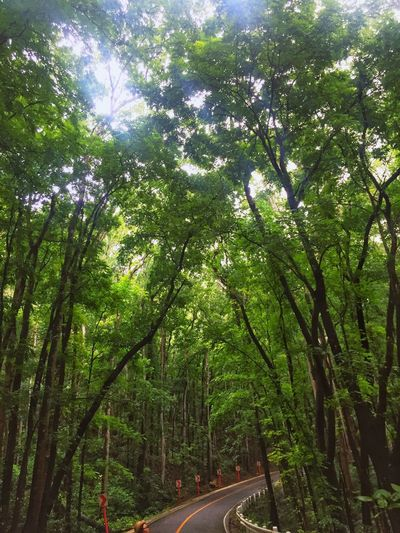 En Reverié Tree Nature Growth Forest Green Color Tranquility Lush Foliage Beauty In Nature Outdoors No People Scenics Day The Way Forward Road Jaysalvarez Photography Bohol