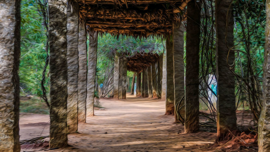 Enroute Auroville.. EyeEm Best Shots EyeEmNewHere EyeEm EyeEm Nature Lover Low Angle View Colors Landscape Scenery Beauty In Nature Green Color Perspective Photography Frame Nature Blue Hanging Out Adventure Travel Destinations Travel Selective Focus Hike The Street Photographer - 2018 EyeEm Awards Architecture Passageway Corridor Historic Hallway History Archway Passage