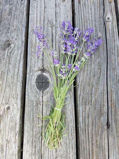 Flower Beauty In Nature Purple Freshness Rustic Rustic Style Rustic Charm Rustic Beauty Lavander Flowers Lavender Blossoms Lavender And Wood