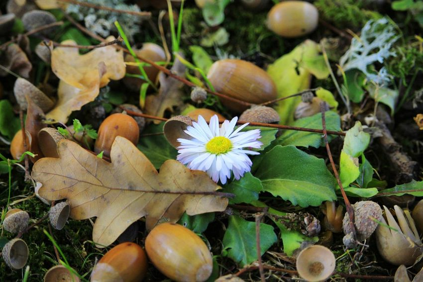 Autumn background Beautyofnature Naturebeauty Capture Moment Composition Forestphotography Photoart Artofphotography Autumn Autumncolors EyeEm Selects Naturephotography Forest Photography Forest Forestwalk Nature Flower Head Flower Leaf Close-up Plant Blooming Growing In Bloom Plant Life Botany