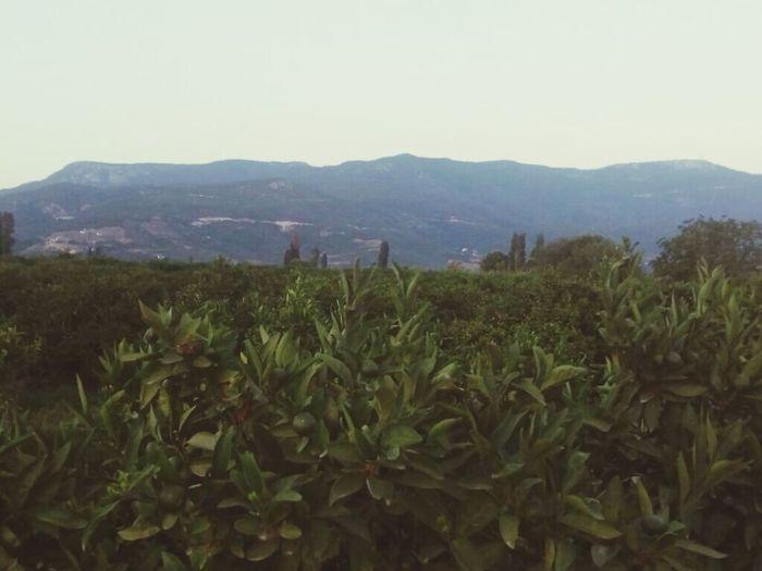 Growth Mountain Nature Landscape Beauty In Nature Türkiye