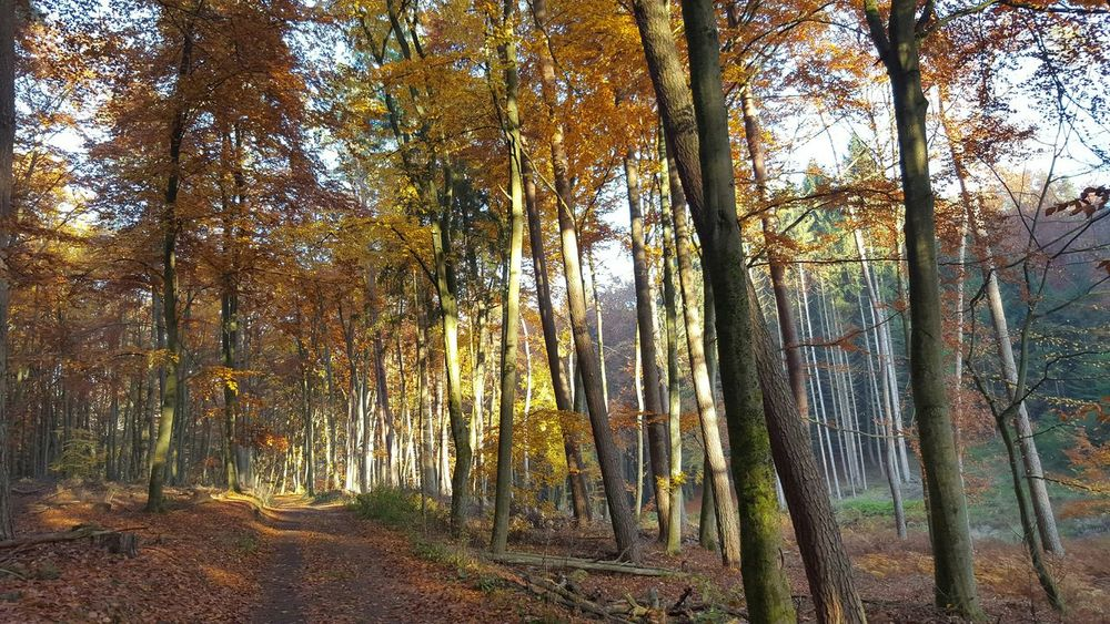 Nature Photography Autumn Colors Autumn🍁🍁🍁 Wood Leading Lines Light And Shadow Nature_collection My Best Photo 2015 Nature On Your Doorstep Outdoor Photography Nature_perfection Natural Beauty Naturephotography Autumn Pattern Pieces The Beauty Of Fall Autumn Collection Autumn 2015 Places You Must To See Autumnbeauty Twillight No People Glitch Bruchmühlbach-Miesau White Wall