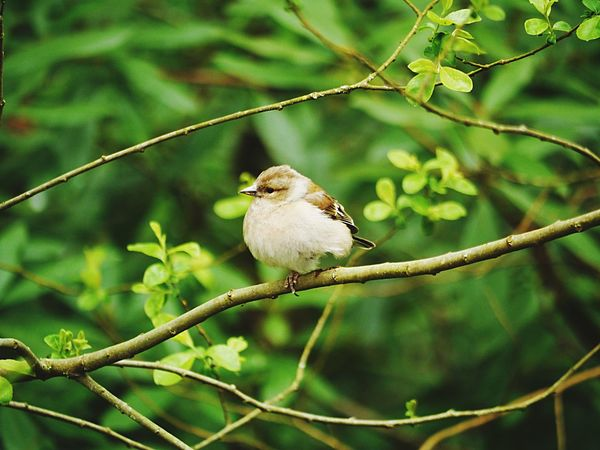 Happy One Animal Bird Animal Themes Animals In The Wild Perching Animal Wildlife Focus On Foreground No People Nature Day Branch Tree Outdoors Close-up Beauty In Nature Devon EyeEmNewHere
