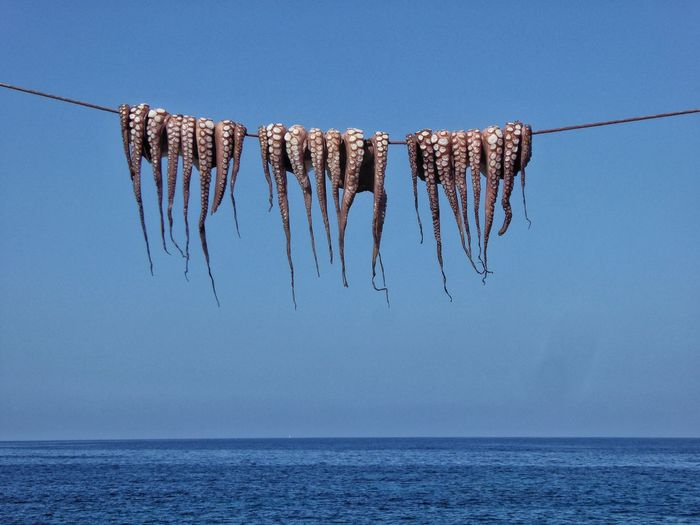 Low angle view of dead octopus hanging on rope over sea against clear blue sky