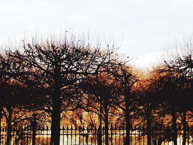 Paris, France  Trees Fall Colors
