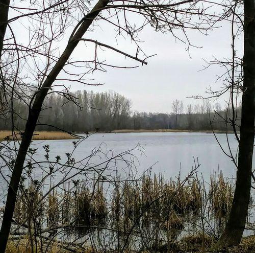 Lochness Park Cat Tails Grey Skies Spring 2017 Pond Minnesota Photographer Minnesota Morning Nature