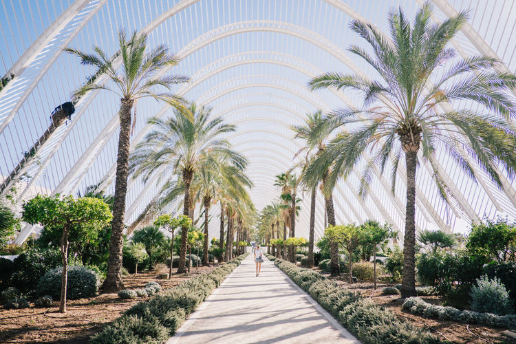 Rear view of woman walking towards walkway amidst palm trees