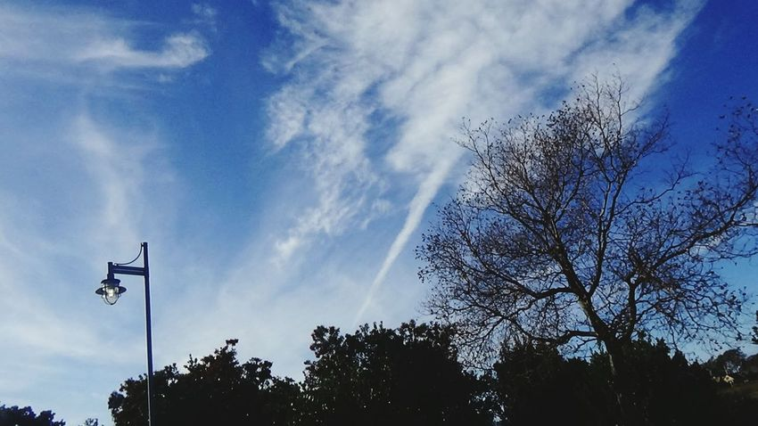 Chemtrail Planes Bay Area Chemtrails California Dreaming Poison Skywatching Bayarea Vallejo,cavaPoisoned_pics_photography Poison