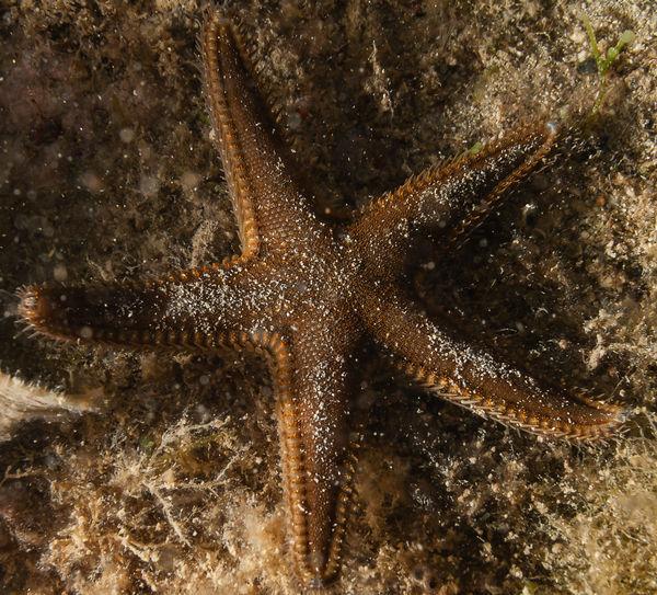 Macro shot of coral in sea